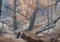 El cuadro 'Pinar quemado' de Lucas de Saá, acrílico y óleo sobre lienzo, creado para el proyecto Nisfade de identificación y protección de los pinos singulares de El Hierro.| FOTO DEL CUADRO POR JAVIER PÉREZ MATO