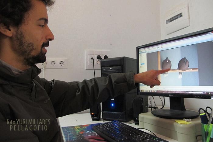 Javier Romero controla desde la pantalla de este ordenador las cámaras que vigilan a las distintas parejas, cada una en su jaula (8 cámaras para otrasb tantas jaulas y una novena para la jaula de vuelo de los juveniles).