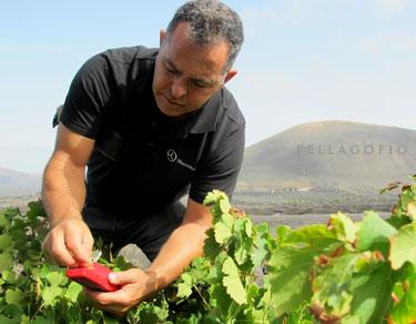 Alberto González, enólogo de Bodegas Rubicón, comprueba la graduación de la uva días antes de la vendimia.| FOTO YURI MILLARES