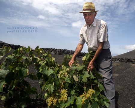 Germán López en los hoyos de La Geria junto a la bodega, en la vendimia 2014./ FOTO T. G.