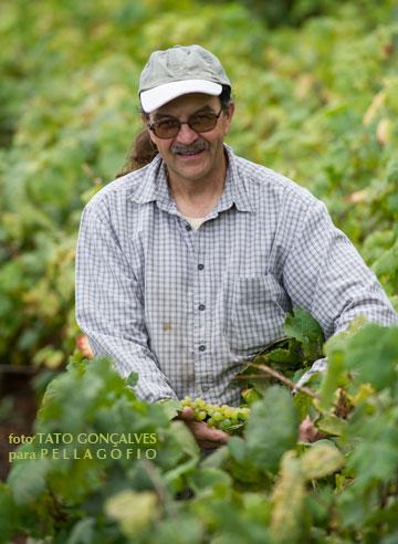 Las uvas que cultiva Uwe Urbach en la zona alta del valle del Golfo son de agricultura ecológica.| FOTO TATO GONÇALVES