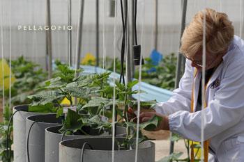Cultivos experimentales en la Estación Experimental Cajamar Las Palmerillas. | FOTO ARCHIVO CAJAMAR