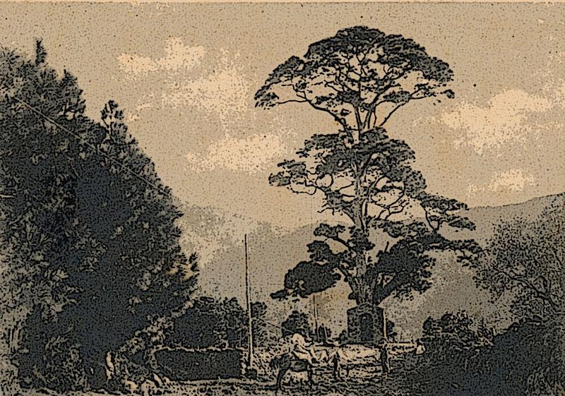 Maderas el pino las palmas ngel de madera policromada - Maderas del pino ...