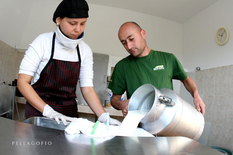 Fran descarga la leche en la cuba del cuarto del queso, donde Tania tiene todo preparado.   FOTO YURI  MILLARES