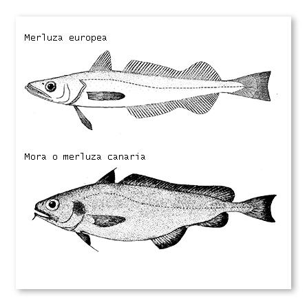 merluza-y-mora-4016-1
