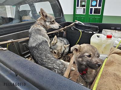 Pareja de lobitos con un cachorro en una camioneta aparcada delante del restaurante Casa Goyo, en San Andrés. | FOTO TATO GONÇALVES