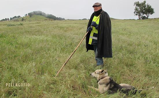 Pedrín y 'Dike' vigilan al ganado que pasta en Jinama. | FOTO YURI MILLARES