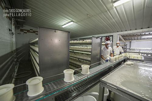 Los moldes con la cuajada llegan por la cinta transportadora hasta las prensas.| FOTO T. GONÇALVES