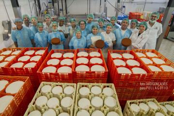 Personal de la empresa Grupo Ganaderos de Fuerteventura que elabora el famoso queso Maxorata. | FOTO TATO GONÇALVES