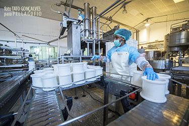 Llenado de moldes para el queso mini, de 410 gramos, en la sala de elaboración. | FOTO TATO GONÇALVES