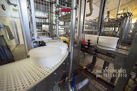 Una máquina extrae por succión los quesos de sus moldes y van en la cinta transportadora hasta el saladero. | FOTO TATO GONÇALVES