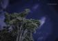 El pino objeto de este artículo, retratado una noche de cielo estrellado. | FOTO TATO GONÇALVES