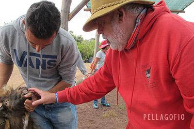 El veterinario Juan Capote recorre la feria inspeccionando los animales, como miembro del jurado que otorgará los premios a los mejores ejemplares. | FOTO Y. MILLARES