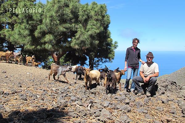 En el sur de La Palma, Carlos y Ana Laura con su ganado en la granja El Manchón (Jedey, El Paso). | YURI MILLARES