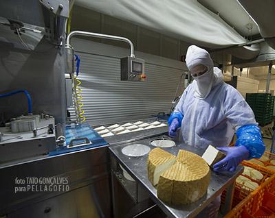 Corte y envasado en cuñas en la fábrica Quesos Flor Valsequillo. | FOTO T. GONÇALVES