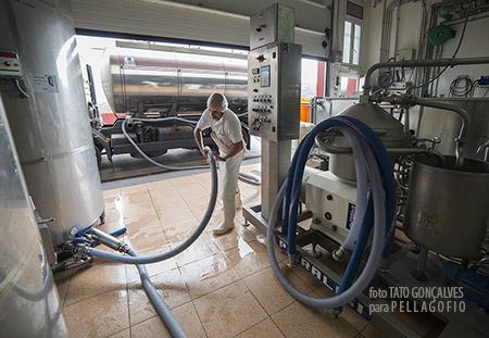 Descarga de la leche en Finca Fuente Morales (Almatriche, Las Palmas de G.C.). | FOTO T. GONÇALVES