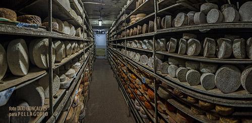 Una de las numerosas cámaras de maduración que la empresa Quesos Bolaños tiene en su almacén en Salto del Negro. | FOTO T. GONÇALVES