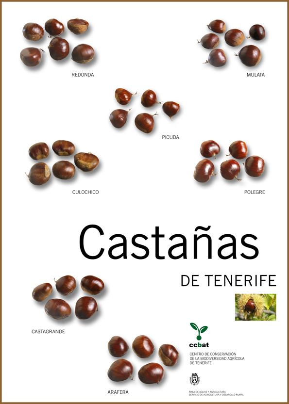 Cartel con las castañas de Tenerife: redonda,mulñata picuda, culochico, polegre, castagrande y arafera. | CENTRO DE CONSERVACIÓN DE LA BIODIVERSIDAD AGRÍCOLA DE TENERIFE (CCBAT)