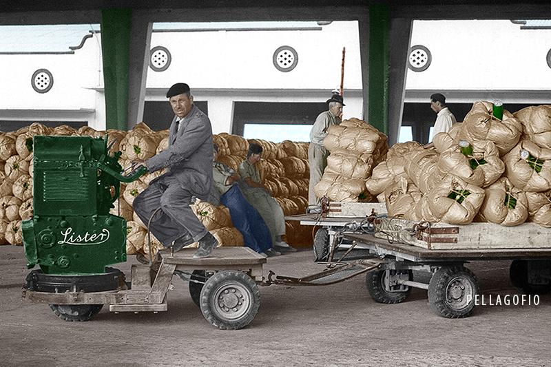 Carretilla Lister con planchas cargadas de plátanos. | ARCHIVO AUTORIDAD PORTUARIA (COLOREADA POR MEDINA
