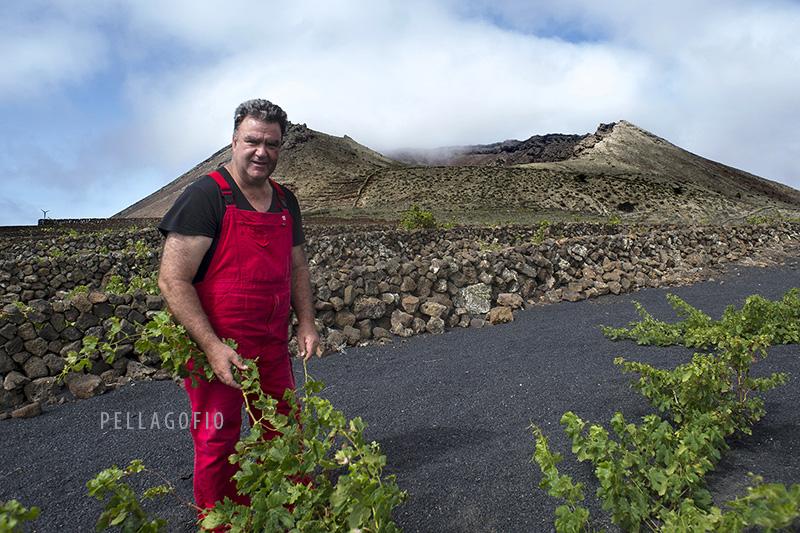 Ricardo Socas muestra la viña tradicional que tiene en producción en una finca delante del volcán de la Corona a 600 m sobre el mar. | FOTO TATO GONÇALVES