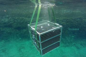 Uno de los jaulones con el tinto 2015 La Grieta, en el momento de ser sumergido en el mar a 18 m de profundidad.| FOTO BODEGA MALPAÍS DE MÁGUEZ