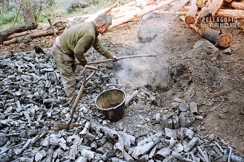 Leonardo Jiménez desbarata su hoya tendida o 'canaria' tras la combustión de la leña y extrae el carbón (pinar de los Llanos de la Pez, 1996). | FOTO YURI MILLARES