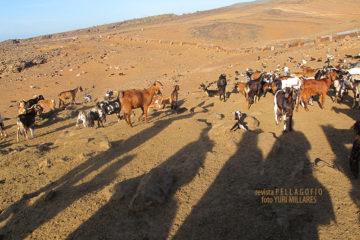 La luz de la mañana dibuja la presencia de la expedición en tierras del sur de Gran Canaria.| FOTO YURI MILLARES
