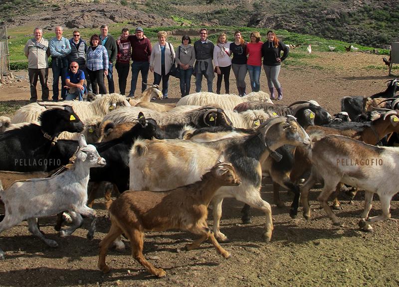 Junto a la presa de las Niñas, los ganaderos y técnicos italianos visitan a las gemelas Bea y Natalia y observan cómo sale el ganado a pastar tras el ordeño. | FOTO YURI MILLARES