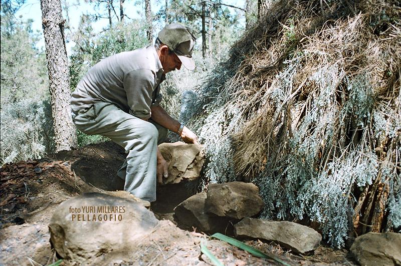 1. Tras cubrir la hoya o carbonera con monte, rodea la base con piedras.   FOTO YURI MILLARES