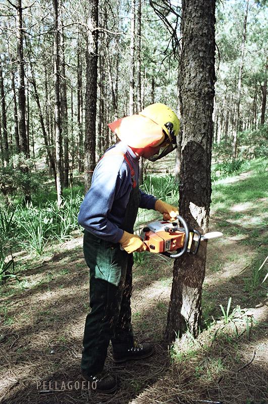 Forestal alemán durante las pruebas de clareo del pinar de los llanos e la Pez.   FOTO YURI MILLARES